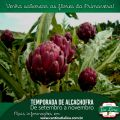 De setembro a novembro os visitantes encontrarão delicias feitas de alcachofra na Tia Lina