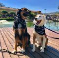 No dia 28 de julho, a Vinícola Góes realiza o passeio 'Domingo Bom pra Cachorro', que une cães e tutores em um inusitado passeio.